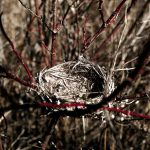 Empty-Nest-Syndrome---Family-First-Therapy